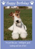 "Wire Haired Fox Terrier-Happy Birthday - ""I'm Just Like You"" Theme"